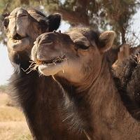 Voyage au Maroc avis de vos clients