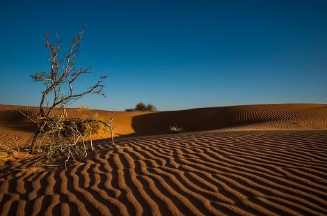 Dune immaculée du désert de Merzouga