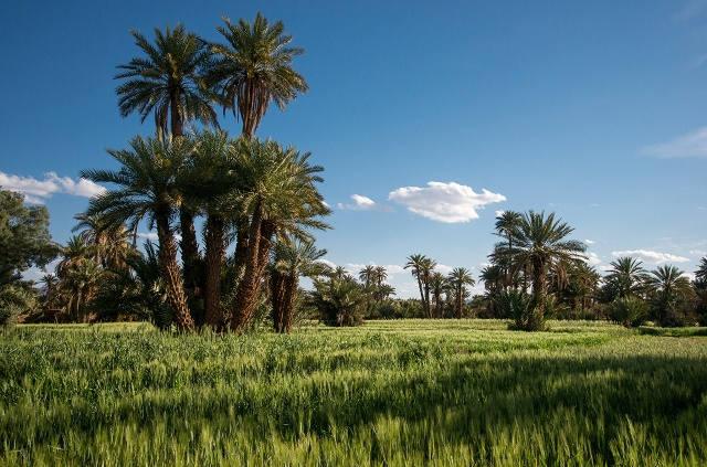 Champ culture maroc