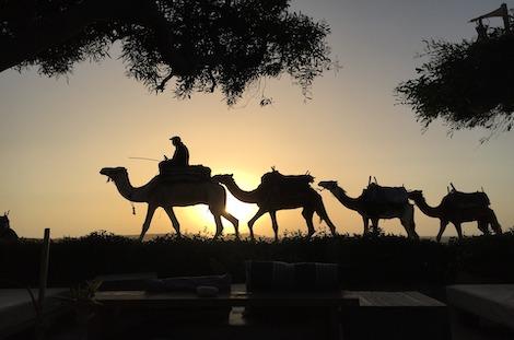 Randonnée chamelièredans le désert marocain